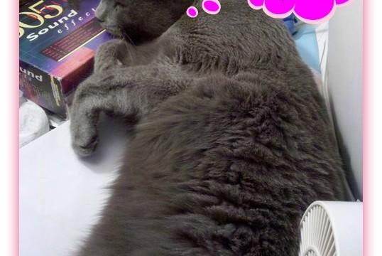 Tinkie sleeping